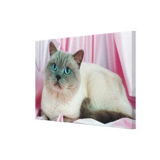 Portrait of cat stretched canvas prints
