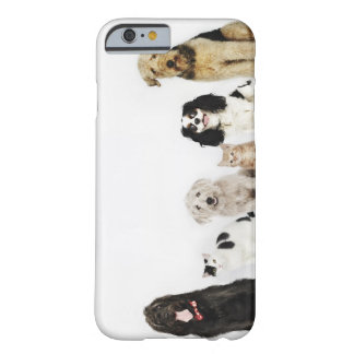Portrait of cats and dogs sitting together barely there iPhone 6 case