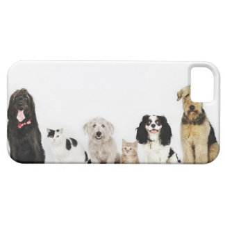 Portrait of cats and dogs sitting together iPhone 5 case