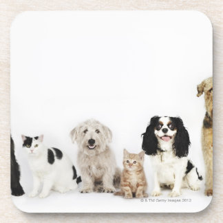 Portrait of cats and dogs sitting together coaster
