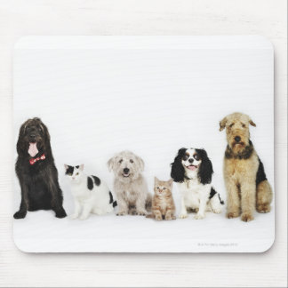 Portrait of cats and dogs sitting together mouse mat