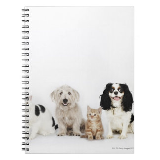 Portrait of cats and dogs sitting together notebook