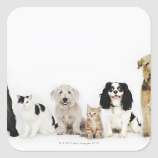Portrait of cats and dogs sitting together square sticker