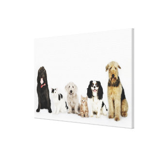 Portrait of cats and dogs sitting together stretched canvas prints
