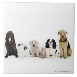 Portrait of cats and dogs sitting together tile