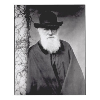 Portrait of Charles Darwin  1881