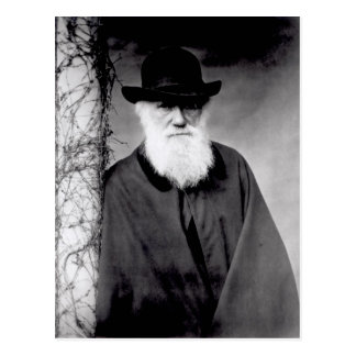 Portrait of Charles Darwin  1881 Postcard