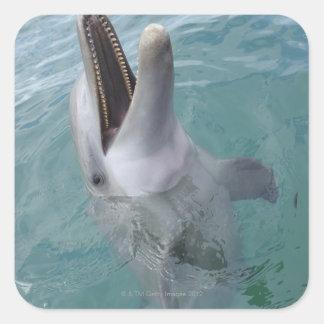 Portrait of Common Bottlenose Dolphin, Caribbean Square Sticker