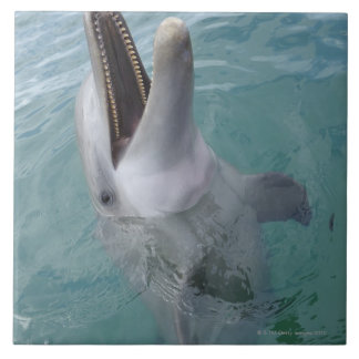 Portrait of Common Bottlenose Dolphin, Caribbean Tile