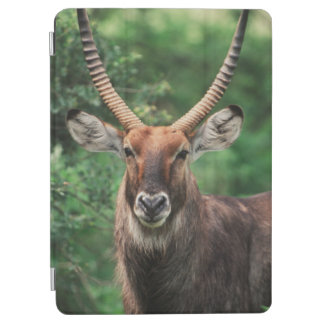 Portrait of Common Waterbuck iPad Air Cover