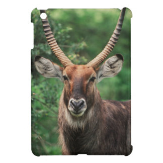 Portrait of Common Waterbuck iPad Mini Cases