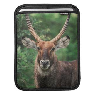 Portrait of Common Waterbuck iPad Sleeve