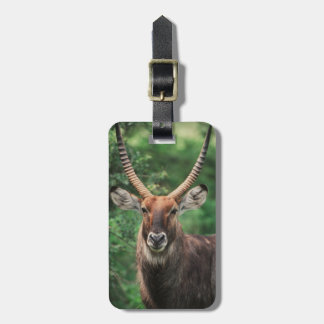 Portrait of Common Waterbuck Luggage Tag