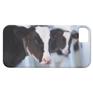 Portrait of cow barely there iPhone 5 case