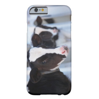 Portrait of cow barely there iPhone 6 case