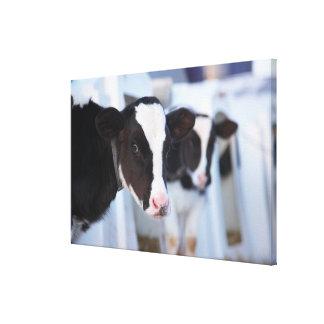 Portrait of cow canvas print