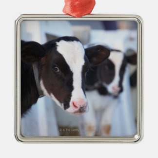 Portrait of cow christmas ornament