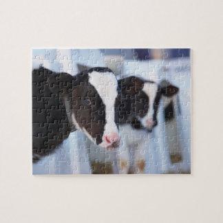 Portrait of cow jigsaw puzzle