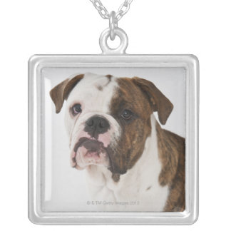 Portrait of cute Bulldog pup Silver Plated Necklace