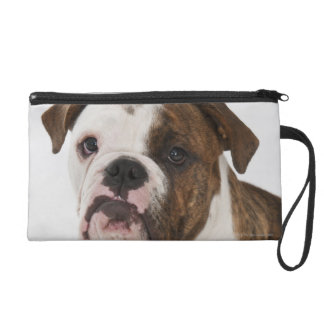 Portrait of cute Bulldog pup Wristlet