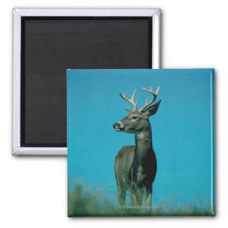 Portrait of deer magnet