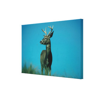 Portrait of deer stretched canvas print