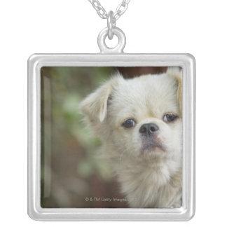 Portrait of Dog 2 Jewelry