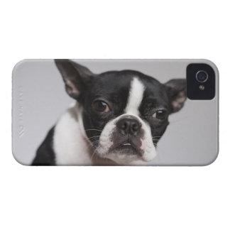 Portrait of dog Case-Mate iPhone 4 cases