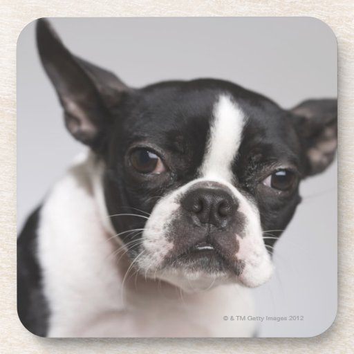 Portrait of dog coasters