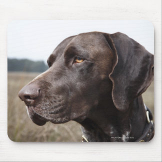 Portrait of Dog, Houston, Texas, USA Mouse Mat