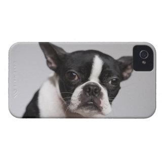 Portrait of dog iPhone 4 Case-Mate cases