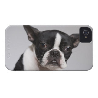 Portrait of dog iPhone 4 Case-Mate cases