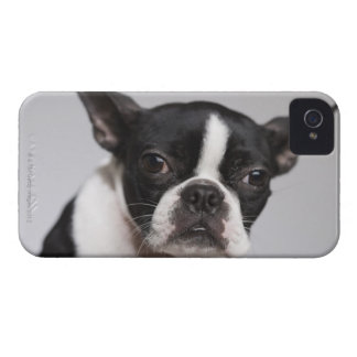 Portrait of dog iPhone 4 cases