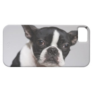 Portrait of dog iPhone 5 cases