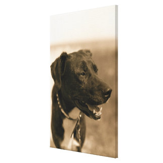Portrait of Dog Outdoors Canvas Print