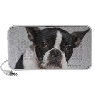 Portrait of dog travel speaker