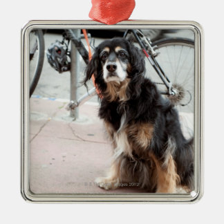 Portrait of dog waiting expectantly for owner; ornament