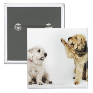 Portrait of dog waving at another dog 15 cm square badge