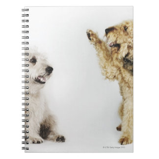 Portrait of dog waving at another dog notebook