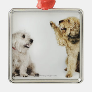 Portrait of dog waving at another dog Silver-Colored square decoration