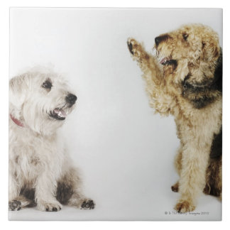 Portrait of dog waving at another dog tile