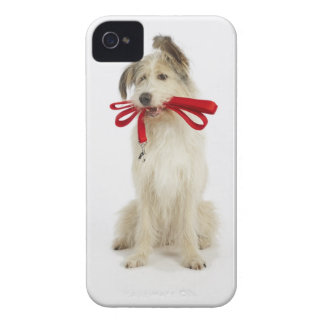 Portrait of Dog with Leash iPhone 4 Cases