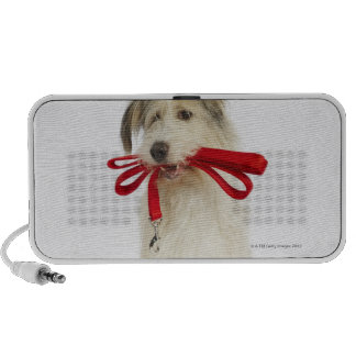 Portrait of Dog with Leash iPhone Speaker