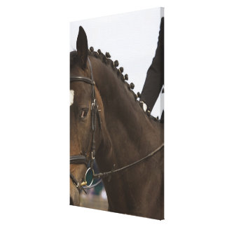 portrait of dressage horse canvas print