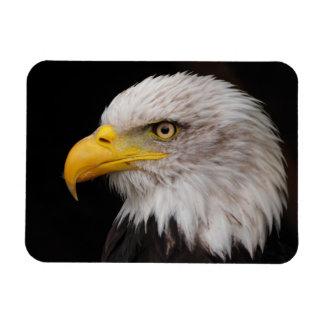 Portrait of eagle rectangular photo magnet