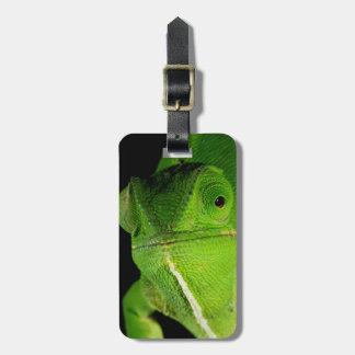 Portrait Of Flap-Necked Chameleon Bag Tag