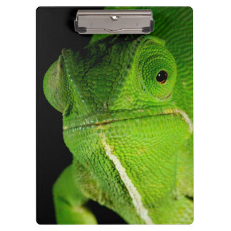 Portrait Of Flap-Necked Chameleon Clipboard