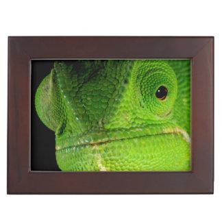 Portrait Of Flap-Necked Chameleon Keepsake Box