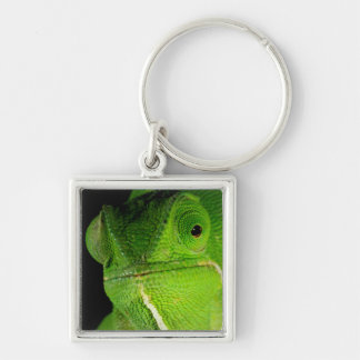 Portrait Of Flap-Necked Chameleon Key Ring