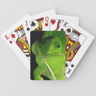 Portrait Of Flap-Necked Chameleon Playing Cards